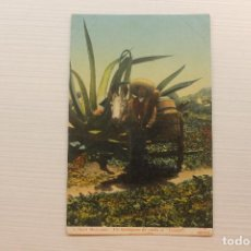 Postales: POSTAL, MÉXICO, TIPOS MEXICANOS, UN TLACHIQUERO DE VUELTA AL TINACAL, F.M.. Lote 288083553