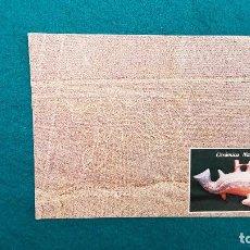 Postales: POSTAL GEOGLIFOS DEL ANFITEATRO DE NAZCA - PERU. Lote 288710413