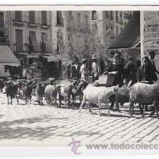 Postkarten - POSTAL FOTOGRAFICA ( Granada ? ) REBAÑO DE CABRAS. SIN CIRCULAR - 18043014