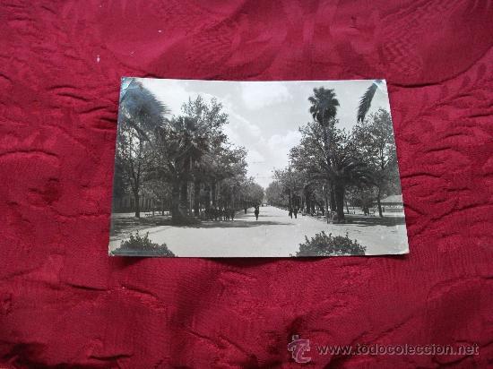 LINARES PASEO DE LINAREJOS,ED ARRIBAS (Postales - España - Andalucia Moderna (desde 1.940))