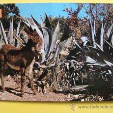 Postales: POSTAL DE TORREMOLINOS, MÁLAGA. AÑO 1962. SIMPÁTICO BORRIQUITO BURRO. 69. . Lote 32413364