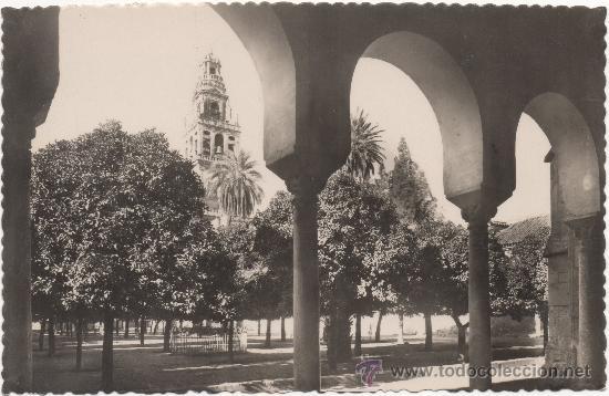 CÓRDOBA.- MEZQUITA-CATEDRAL. CLAUSTRO DEL PATIO DE LOS NARANJOS. (Postales - España - Andalucia Moderna (desde 1.940))