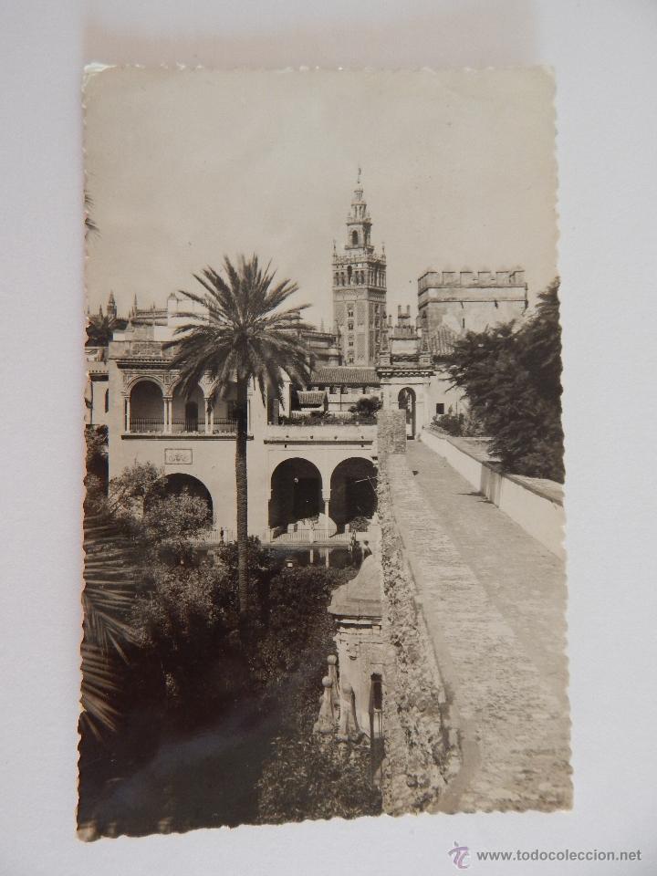 SEVILLA: LA GIRALDA DESDE LOS REALES ALCÁZARES (Postales - España - Andalucia Moderna (desde 1.940))