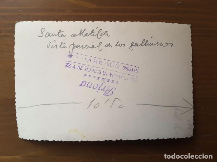 Postales: POSTAL FOTOGRÁFICA SANTA MATILDE - FOTOGRAFIA ARJONA - Foto 2 - 65991226