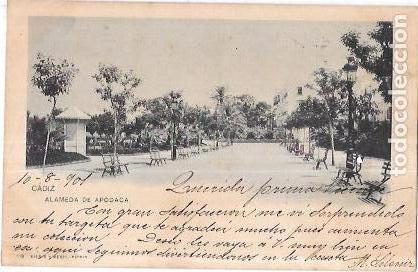 TARJETA POSTAL DE CADIZ. ALAMEDA DE APODACA. 119. HAUSER Y MENET. (Postales - España - Andalucía Antigua (hasta 1939))