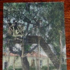Postales: ANTIGUA POSTAL DE LA CAROLINA (JAEN) BALNEARIO DE LA ALISEDA, KIOSCO SOBRE UNA ENCINA EN UNO DE LOS . Lote 141096014