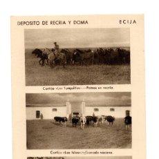 Postales: ECIJA (SEVILLA).- DEPOSITO DE RECRIA Y DOMA. CORTIJO. LAS TURQUILLAS. POTROS DE RECRIA.GANADO VACUNO. Lote 141813086