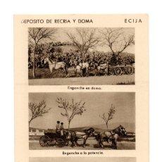 Postales: ECIJA (SEVILLA).- DEPOSITO DE RECRIA Y DOMA. ENGANCHE EN DOMA. POTENCIA. LARGA. Lote 141813826