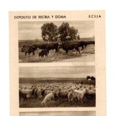 Postales: ECIJA (SEVILLA).- DEPOSITO DE RECRIA Y DOMA. CORTIJO. LAS TURQUILLAS. GANADO DE EXPLOTACIÓN. Lote 141814206