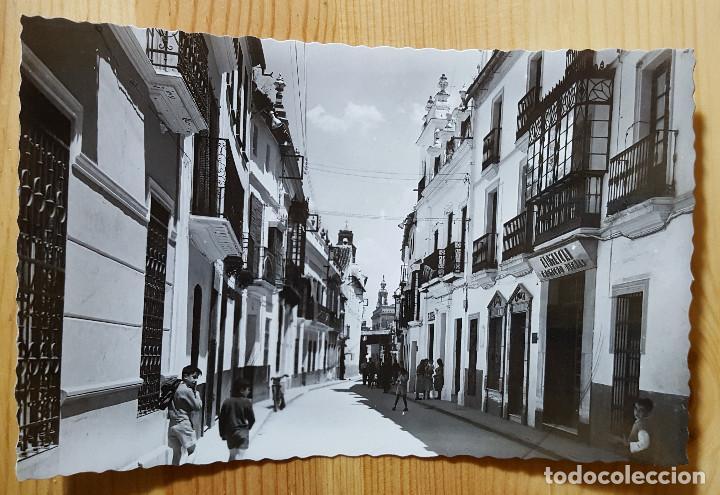 ECIJA CALLE JOSE ANTONIO PRIMO DE RIVERA ED. ARRIBAS Nº 63 (Postales - España - Andalucia Moderna (desde 1.940))