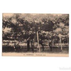 Postales: ALMERÍA.- CORTANDO UVA. Lote 153802850