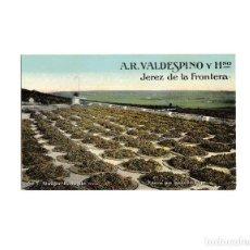 Postales: JEREZ DE LA FRONTERA.(CÁDIZ).- A.R. VALDESPINO Y HNO. ALMIJAR LLENO DE UVA.. Lote 161648034