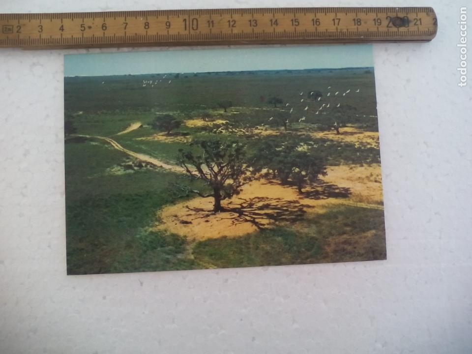 ESTACION BIOLOGICA DE DOÑANA LA PAJARERA, 1976, CSIC WWF. POSTAL POSTCARD (Postales - España - Andalucia Moderna (desde 1.940))