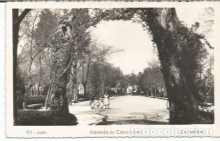 JAÉN - ALAMEDA CALVO SOTELO - Nº 101 ED. ARRIBAS (Postales - España - Andalucia Moderna (desde 1.940))