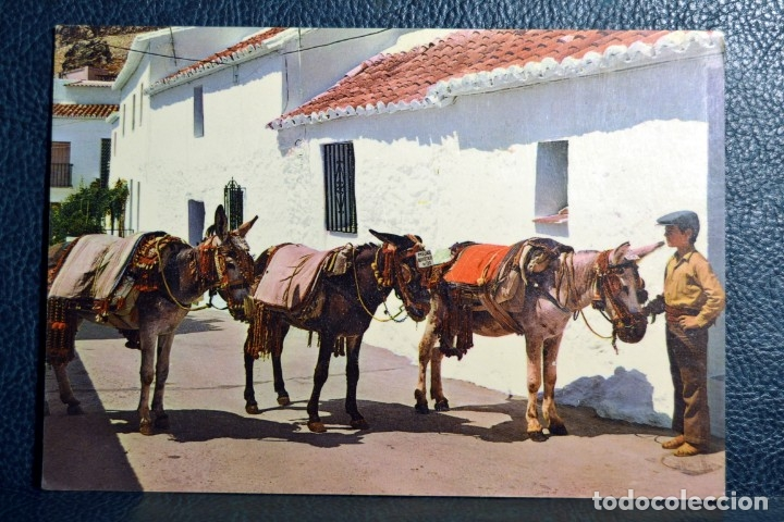 COSTA DEL SOL - MIJAS - BURROS TAXI - 1133 (Postales - España - Andalucia Moderna (desde 1.940))