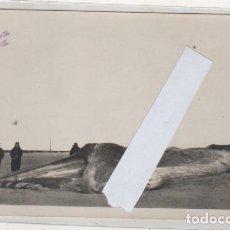 Postales: CÁDIZ. POSTAL FOTOGRÁFICA. BALLENA EN LA PLAYA DE CORTADURA OCTUBRE DE 1925 EL TREBOL SIN CIRCULAR.. Lote 183810612