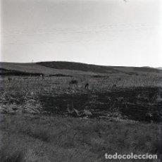 Postales: NEGATIVO ESPAÑA CÁDIZ MEDINA SIDONIA 1970 KODAK 55MM NEGATIVE GRAN FORMATO SPAIN FOTO PHOTO. Lote 195469946