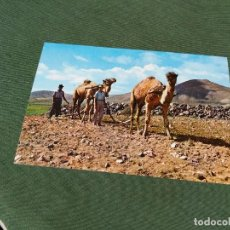 Postales: POSTAL DE CANARIAS - TIPICA- BONITAS VISTAS - LA DE LA FOTO VER TODAS MIS POSTALES. Lote 199208751
