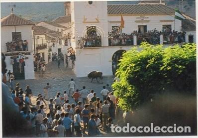 POSTAL ANTIGUA DE GRAZALEMA. CADIZ. PZA. DE ESPAÑA. TORO DE CUERDA P-ANGRAZ-006 (Postales - España - Andalucia Moderna (desde 1.940))