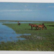 Postales: PARQUE NATURAL DE DOÑANA ♦ EDICIÓN ICONA, 1981. Lote 277043293
