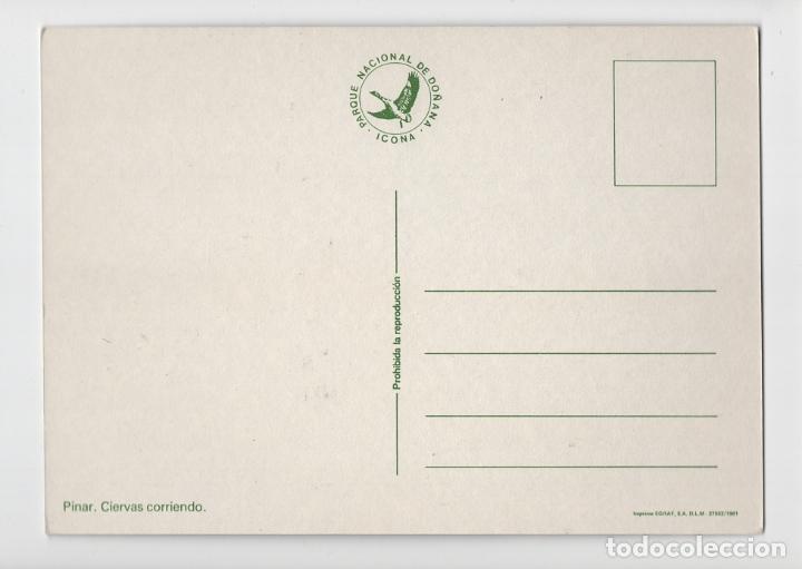 Postales: Parque Natural de Doñana ♦ Edición ICONA, 1981 - Foto 2 - 277043403