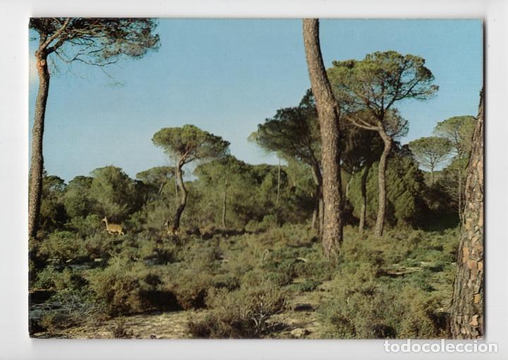PARQUE NATURAL DE DOÑANA ♦ EDICIÓN ICONA, 1981 (Postales - España - Andalucia Moderna (desde 1.940))