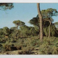 Postales: PARQUE NATURAL DE DOÑANA ♦ EDICIÓN ICONA, 1981. Lote 277043403
