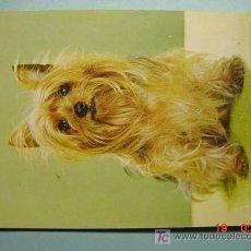 Postales: 998 PERRO DOG CIENTOS DE POSTALES EN MI TIENDA TC COSAS&CURIOSAS. Lote 3417156