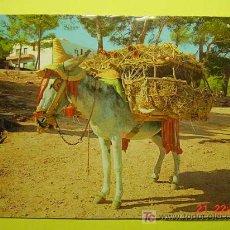 Postales: 1130 BURRO ÂNE DONKEY ASNO CIENTOS DE POSTALES EN MI TIENDA TC COSAS&CURIOSAS. Lote 3443398