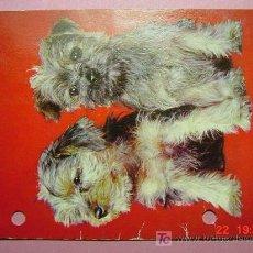 Postales: 1180 PERRO CAN DOG CHIEN PRECIOSA MAS EN MI TIENDA TC COSAS&CURIOSAS. Lote 3449327