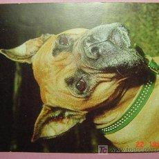 Postales: 1184 BOXER ALEMAN PERRO CAN DOG CHIEN PRECIOSA MAS EN MI TIENDA TC COSAS&CURIOSAS. Lote 3449421