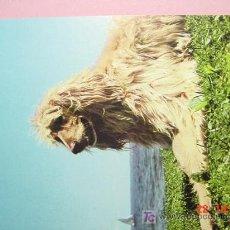 Postales: 1186 GALGO AFGANO PERRO CAN DOG CHIEN PRECIOSA MAS EN MI TIENDA TC COSAS&CURIOSAS. Lote 3449463