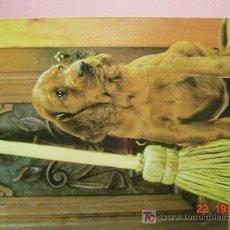 Postales: 1188 PERRO CAN DOG CHIEN PRECIOSA MAS EN MI TIENDA TC COSAS&CURIOSAS. Lote 3449507