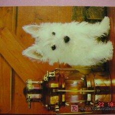 Postales: 1191 PERRO CAN DOG CHIEN PRECIOSA MAS EN MI TIENDA TC COSAS&CURIOSAS. Lote 3449540