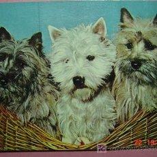 Postales: 120 CACHORROS PRECIOSA PERRO CAN CHIEN DOG MIRA MAS EN MI TIENDA TC COSAS&CURIOSAS. Lote 3715813