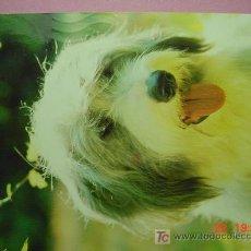 Postales: 1201 CACHORROS PRECIOSA PERRO CAN CHIEN DOG MIRA MAS EN MI TIENDA TC COSAS&CURIOSAS. Lote 3715817