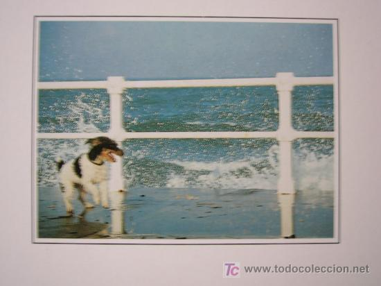 POSTAL PERRO (Postales - Postales Temáticas - Animales)