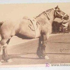 Postales: ANTIGUO CUADERNILLO DE 25 POSTALES DEL 50º CONCURSO NACIONAL DE CABALLO REPRODUCTOR CELEBRADO EN BRU. Lote 27639510
