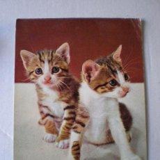 Postales: POSTAL GATOS. CERBER ED. REF. 3025/3. FECHADA EN ORIHUELA (ALICANTE) EL 12 - 06- 1973. Lote 6440262