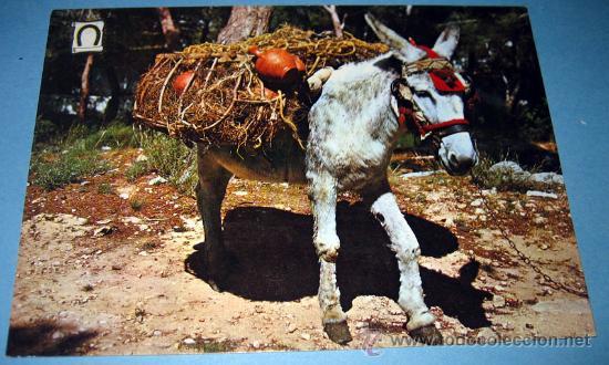 ANTIGUA Y CURIOSA POSTAL DE UN BURRO - TITULADA BURRITOS TIPICOS - NO CIRCULADA . ED. PERGAMINO - (Postales - Postales Temáticas - Animales)