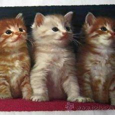 Postal con tres gatos cachorros escrita 1966