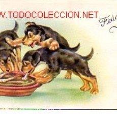 Postales: DIVERTIDA POSTAL DE UNOS PERROS. Lote 2291696