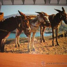 Postales: 1441 BORRICOS TIPICOS. Lote 9841384