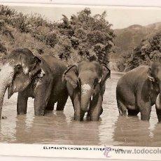 Postales: POST CARD 58 ELEPHANTS CROSSING A RIVER CEYLON SRI LANKA. Lote 9928255