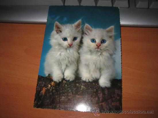 GATITOS (Postales - Postales Temáticas - Animales)