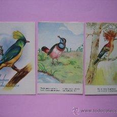 Postales: LOTE TRES POSTALES DE PAJAROS SIN CIRCULAR. Lote 27133167