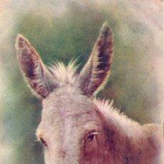 Postales: A ROCKY MOUNTAIN CANARY (BURRO, EN ESPAÑOL). POSTAL INGLESA COLOR, C. 1915. CANARIAS. Lote 26289409