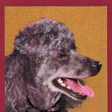 Postales: POSTAL ANTIGUA DE ANIMALES - PERROS - LAZO DE COLOR. Lote 11676295