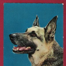 Postales: POSTAL ANTIGUA TROQUELADA DE ANIMALES - PERROS. Lote 11676495