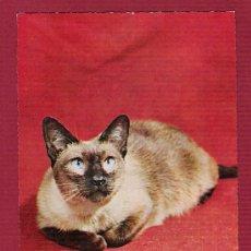 Postales: POSTAL ANTIGUA TROQUELADA DE ANIMALES - GATO SIAMES. Lote 11676520